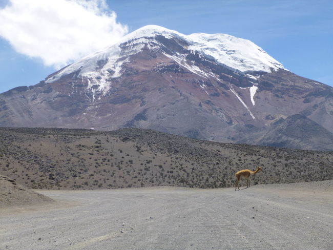 Andes Beauty In Nature Chimborazo Cold Cold Temperature Ecuador Equador Landscape Mountain Mountain Range Nature Non-urban Scene Outdoors Physical Geography Remote Riobamba Scenics South America Southamerica The Andes Tranquil Scene Tranquility Vicuña Vicuñas Volcan Chimborazo