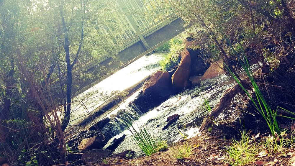Shadow Sunlight Day High Angle View Low Section Outdoors Nature Australian Photographers AndroidPhotography Android Photography Backgrounds Western Australia Beauty In Nature Landscape Nature Aboriginal Land Australian Landscape Scenics Freshness Tree Creekside Water Running Water