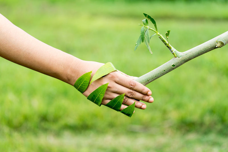 Cropped image of woman shaking hand with plant