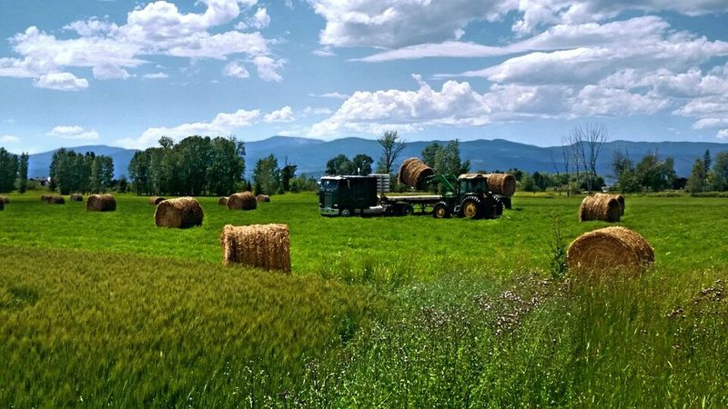 Hanging Out Taking Photos Big Sky Country Photography Farmland Kalispell Montana