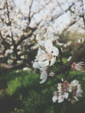 Hello World Spring Flowers Love ♥