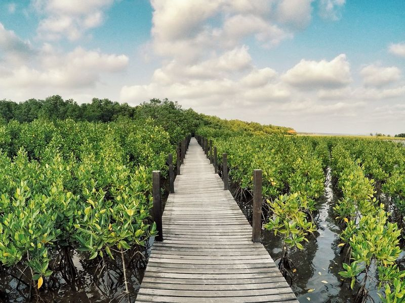 Holiday ☘ / Agriculture Growth Cloud - Sky Outdoors Nature Vegetable Sky Tree Beauty In Nature Day Mangrove Forest Nature Rayong Thailand Trip Photo Relaxing Happiness