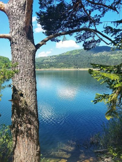 Abant Lake Turkey Bolu..TURKEY Bolu TURKEY Beauty In Nature Blue Tree Water Lake Tree Trunk Reflection Sky Tranquil Scene Countryside Growing Lakeshore Rippled Waterfront Green Greenery Hazy  Lakeside Calm