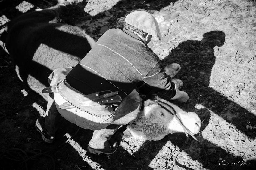 Argentina Photography Blackandwhite Photography Campo Argentino Gaucho Argentino Gauchos Hombre De Trabajo Man And Horse Trabajo De Machos  Trabajo Duro Vidagaucha