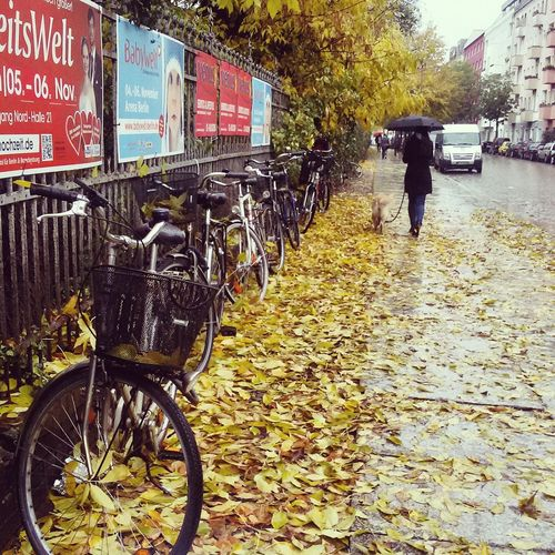 Autumn 🍁🍂 Bikes Transportation Mode Of Transport Land Vehicle Bicycle Parking Outdoors Stationary No People Day Autumn🍁🍁🍁 Autumn Beauty In Nature Freshness Fragility Nature Seasons Seasonal Yellow Leaves Dog Woman Walking A Dog Romantic Romantic Mood Weather Live For The Story