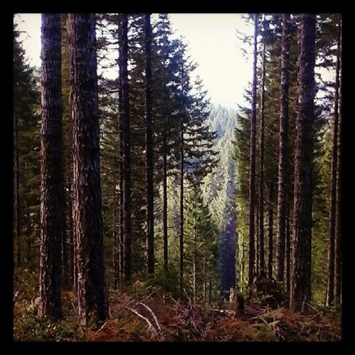 Love those Oregon Forests !!! Oregonforests Beautiful