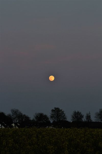 Full moon over Bad Westernkotten Astronomy Beauty In Nature Crescent Evening Sky Field Full Moon Growth Half Moon Landscape Moon Nature Night No People Outdoors Scenics Sky Tranquil Scene Tranquility Tree
