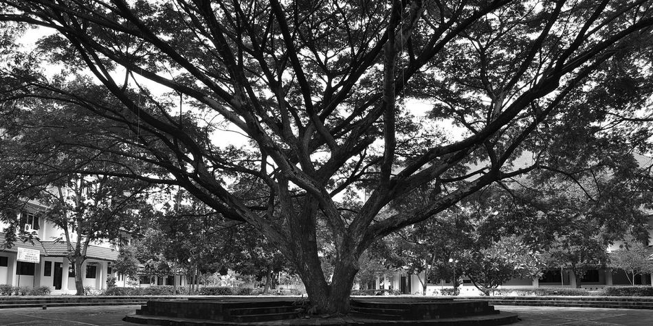 Hugging A Tree Check This Out Black And White Naturelovers Popular Photos