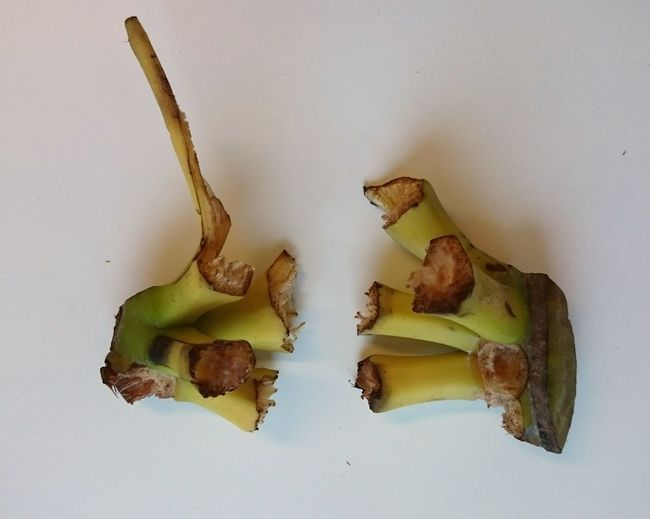 Anyone Seen the Banana Thief ?