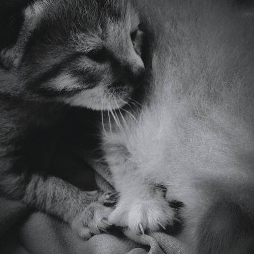 Setiap kesalahan pasti ada akibatnya. Pets One Animal Domestic Animals Animal Themes Domestic Cat Mammal Feline People Day first eyeem photo