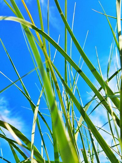 Showcase July Grass Photography Taking Photos Check This Out Relaxing Enjoying Life Samsung Galaxy S6 Green Color Blue Color Nature_collection Sunny Day Sky And Clouds Massachussets Color Photography Eyeemphotography Hanging Out Taking Photos Nature Photography Nature_perfection Nature Textures Check This Out Fine Art PhotographyAwesome Performance