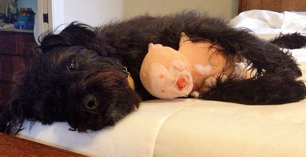 Nap Time Dog With Toy Dog