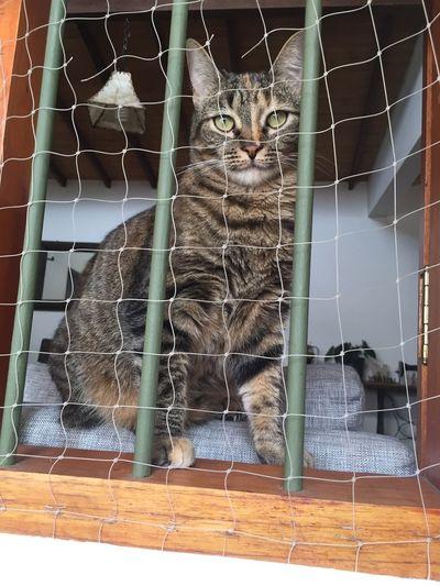 Niza en cautiverio Petslife Eyeemcats Adoptanocompres Niza