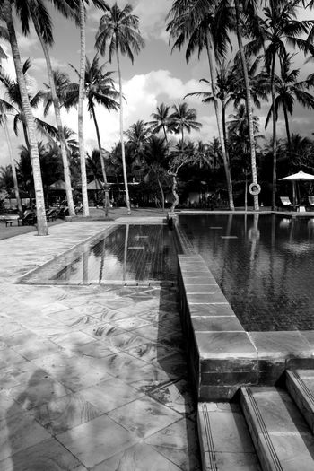 Bali Wellness Hotel View Holiday Moments Natural Structures No People Relaxation Balinese Style Silent Moment Happiness Pool View Blackandwhite Atmospheric Mood Still Life Pattern, Texture, Shape And Form Structures Shadows & Lights monochrome photography Eye Em Best Shots Eye Em Around The World Eye Em Best Shots -Black +White Eye Em Travel Eye Em Selects Nice Place Tree Water Palm Tree