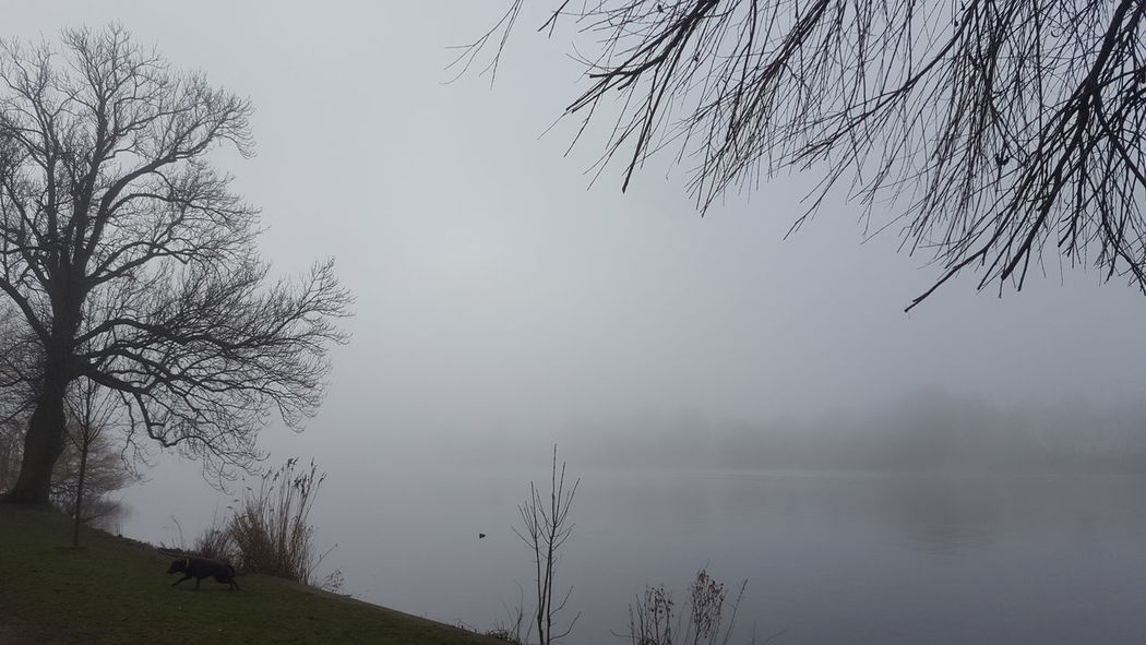 Alster Germany🇩🇪 Hamburg Hamburg City January January 2018 Winter Fog Beauty In Nature Foggy Foggy Day Germany Lake Lake View Mystical Atmosphere Nature No People Outdoors Peaceful Peaceful And Quiet Silence Of Nature Tree Tranquility Tranquil Scene Scenics Water Landscape Fog Hazy  Bare Tree Sky