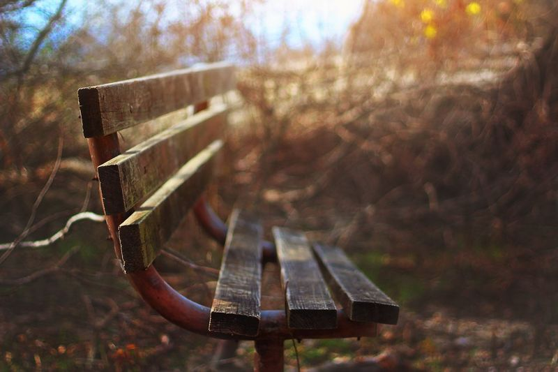 Have a Seat Focus On Foreground Wooden Selective Focus Close-up Brown Outdoors Austin Texas McKinney Falls Bench Fresh On Eyeem