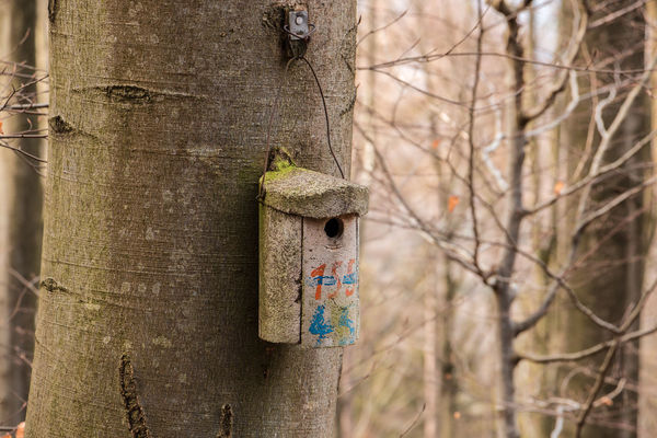 Little bird table on a big old tree Bare Tree Beauty In Nature Birdhouse Branch Close-up Day Focus On Foreground Forest Land Metal Nature No People Outdoors Plant Selective Focus Textured  Tree Tree Trunk Trunk Wood - Material