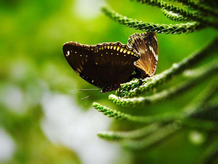 Close-up of butterflies on branch