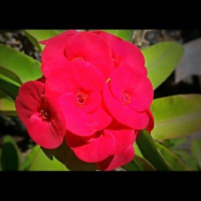 Flower Flowerstagram Flowerporn Red