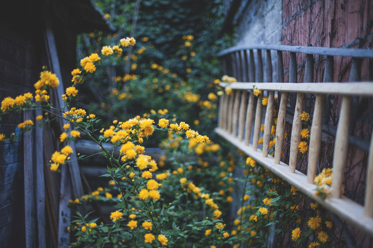 Yellow flowers on railing