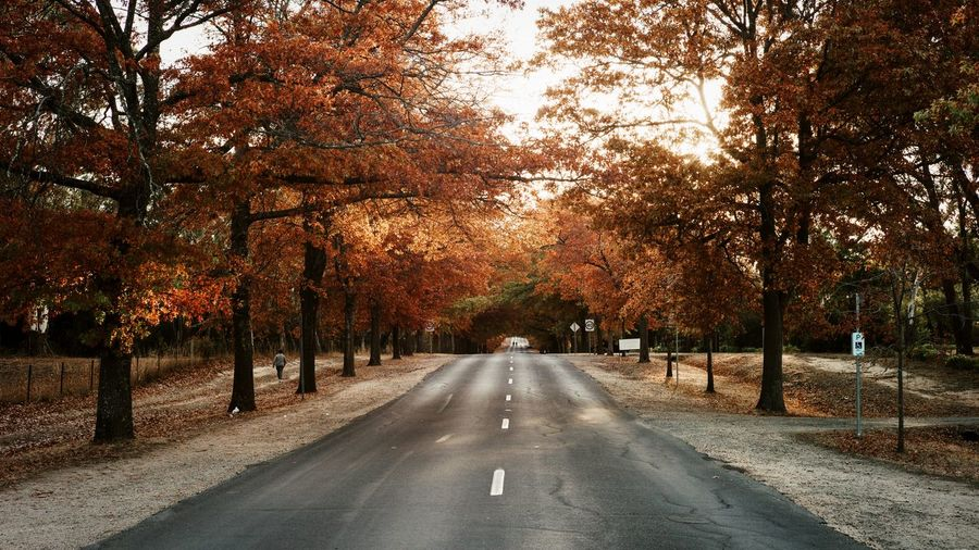An Australian country road in autumn. My Best Photo Tree Autumn Plant Road Direction The Way Forward Diminishing Perspective Nature No People Day Sign Growth Marking Beauty In Nature Outdoors Street Road Marking City Treelined