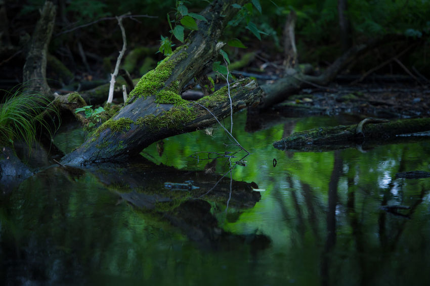 green leaves, growing on an pond in the forest, Growing Habitat Leaves🌿 Quiet Close-up Day Fern Green Color Green Fern Growing Plants Landscape Monochrome Nature No People Outdoors Pond Plants Pond Water Quiet Place  Selective Focus Still Life