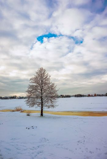 Nature Outdoors Cloud - Sky Day Landscape Beauty In Nature Tree Winter Trees Snow
