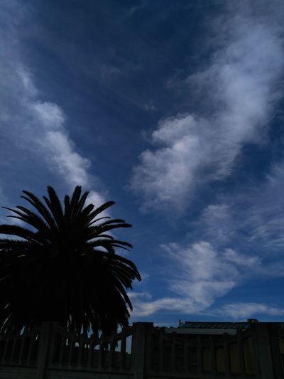 Palm Tree Cloud