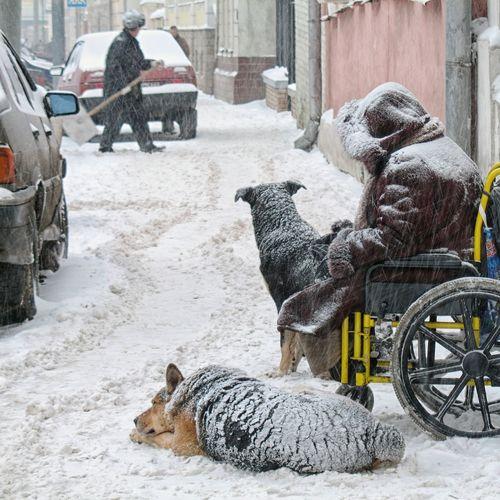 Deepfreeze Streetphotography Street Photography Snowfall Snow Beggar Dogs