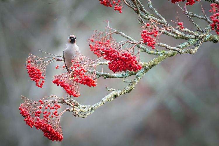 Bird Perching On Fruit Tree