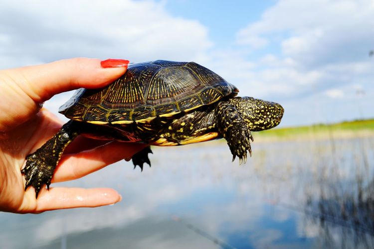 Cropped image of person holding turtle