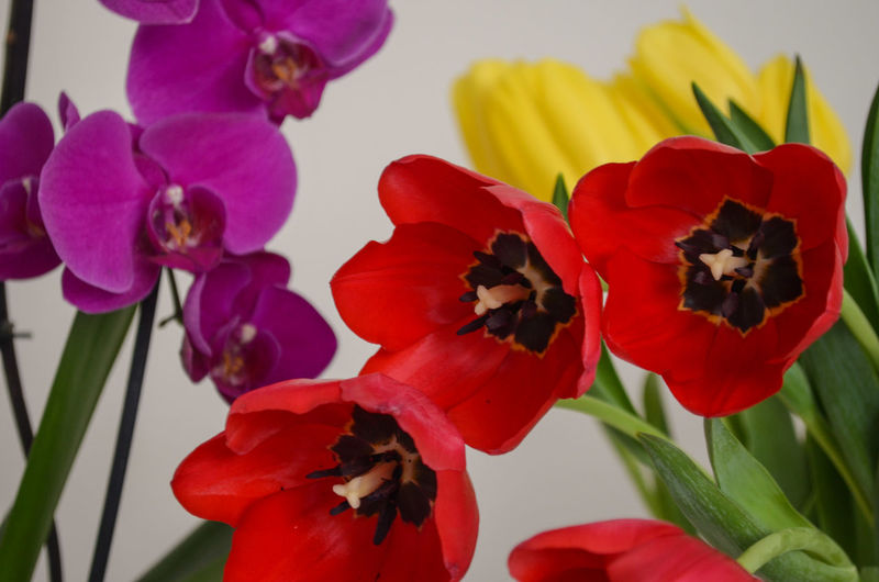 Izmir Flowers Flower Orchid Orchids Tulip Tulips Tulips🌷 Indoors  Interior Interior Decoration Decorative Decoration Freshness Fresh Yellow Yellow Tulips Red Red Flowers Home Homedecor Decorations Plants And Flowers Selective Focus Still Life