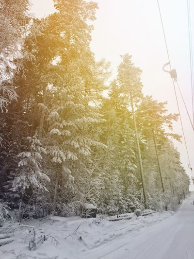 Winter is so ... Incredible Wonderful Winter Snow Nature Beauty In Nature Forest December Snow ❄ Snowboarding Mountain