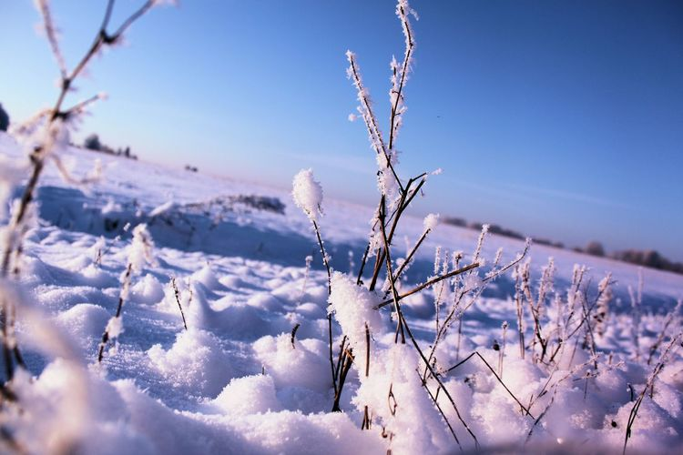 Close-Up Of Frozen Plants In Field During Winter