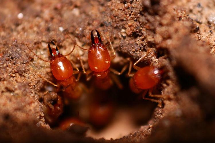 Nature Termite Termites