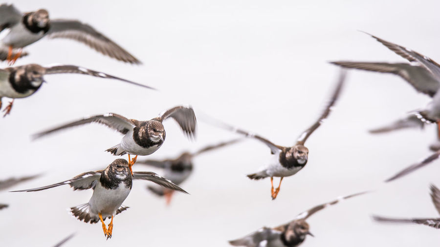 Close-Up Low Angle View Of Birds