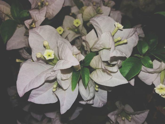 flower Leaf Flower Close-up Plant