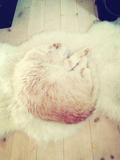 Goodmorning Tjukkas Kattepusenmin