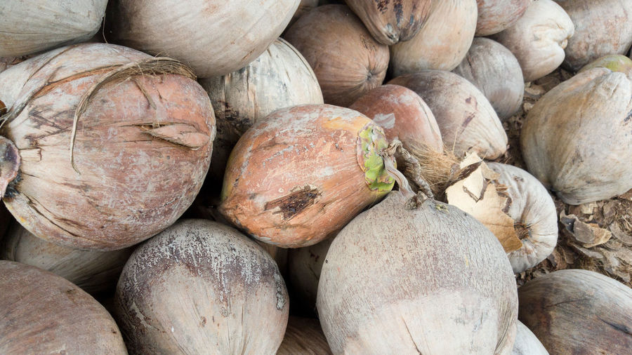 Coconut Abundance Backgrounds Business Close-up Day Food Food And Drink For Sale Freshness Healthy Eating Large Group Of Objects Market Market Stall No People Outdoors Retail  Retail Display Still Life Vegetable Wellbeing