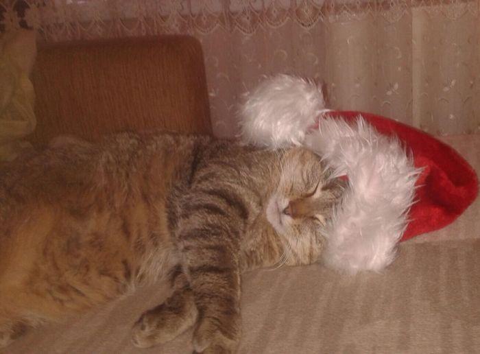 Pets Funny Cat FUNNY ANIMALS Rare Beauty