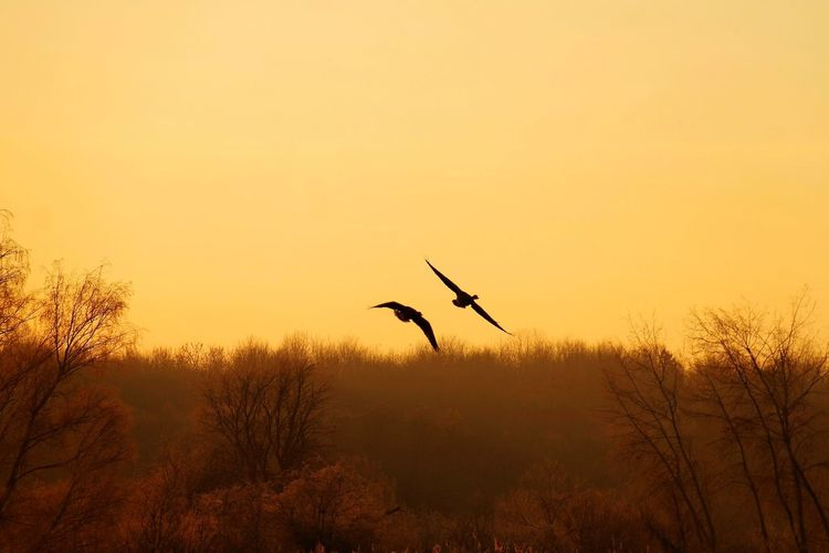 frozen world - two of us Frozen Nature Beauty In Nature Nature Photography Nature_collection Cold Temperature My Point Of View Cold Condition Cold Weather Gold Colored Reinheimer Teich Sunrise Bird Flying Tree Spread Wings Full Length Silhouette Flock Of Birds Freshwater Bird