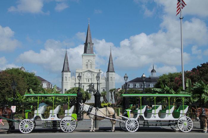 Horses St. Louis Cathedral Animal Animal Themes Animal Wildlife Architecture Belief Building Building Exterior Built Structure Carriage Cloud - Sky Day Horse Mode Of Transportation Nature Outdoors Place Of Worship Religion Sky Spire  Spirituality Transportation Travel Travel Destinations