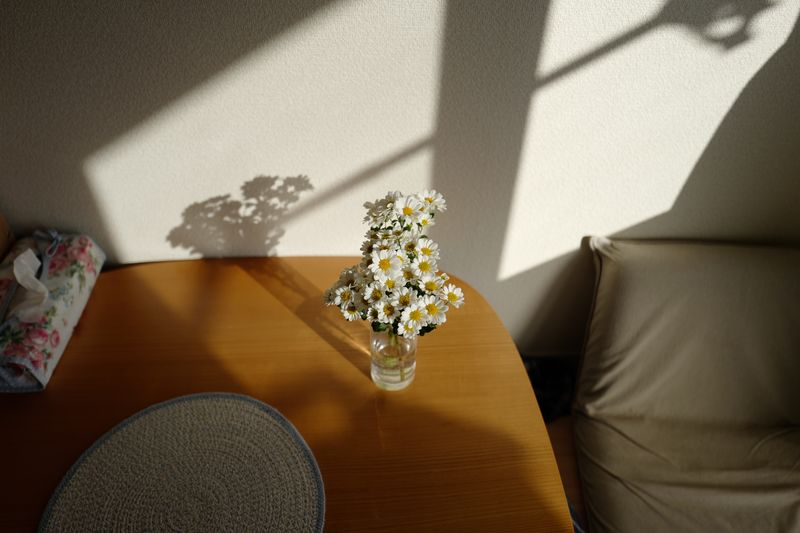 Plant Flower Flowering Plant Nature Table Indoors  Shadow