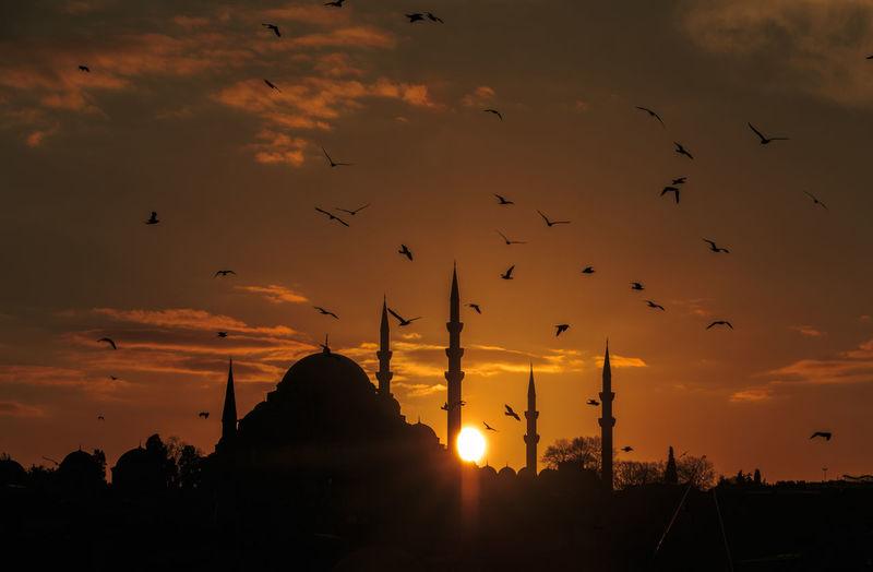 Silhouette Of Bird At Sunset