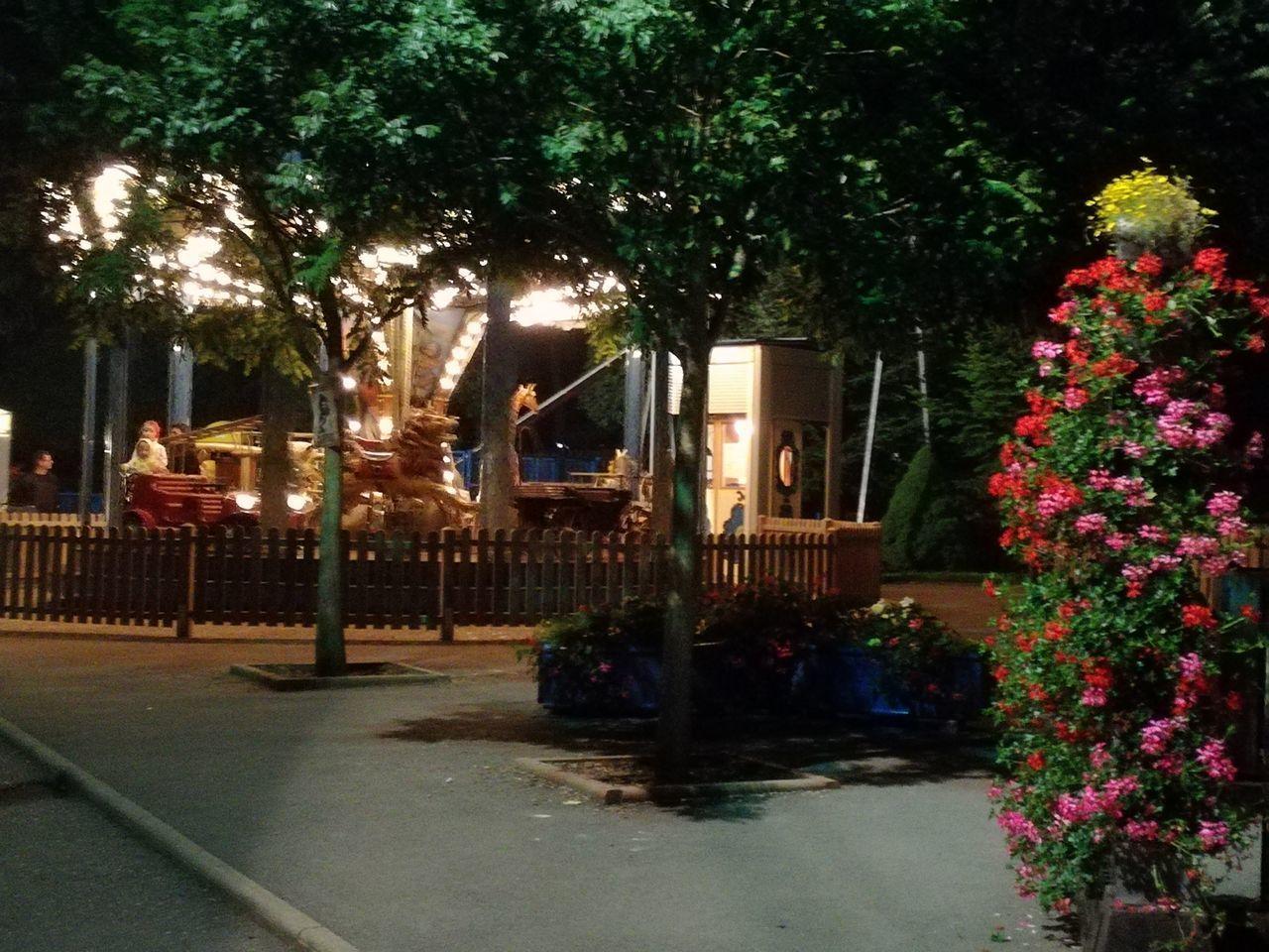 tree, night, illuminated, outdoors, growth, no people, flower, nature, architecture