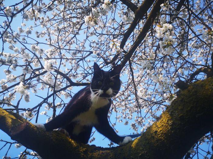 Bäume Cats 🐱