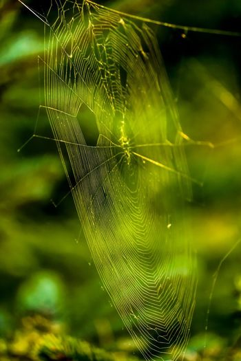 Spider Web Fragility Close-up Animal Themes Beauty In Nature Focus On Foreground Vulnerability  No People Nature Day Natural Pattern Web Outdoors