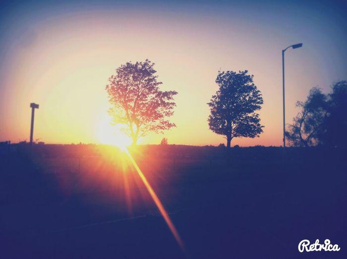 Spiring Sun Nature 🇬🇧
