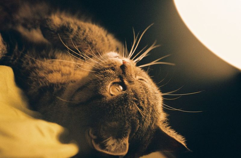 Animal Body Part Animal Themes Close-up Day Domestic Animals Domestic Cat Indoors  No People One Animal Pets