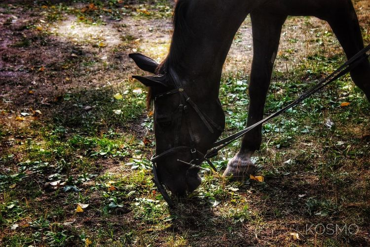 Horse grazing in a forest